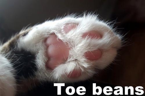 toe-beans